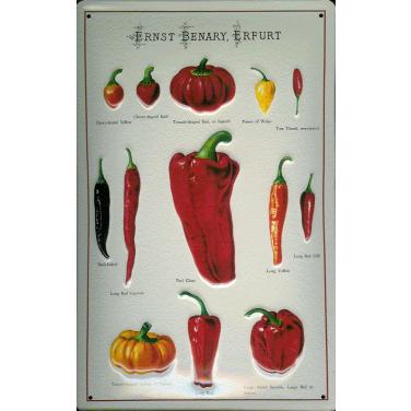 Ernst Benary -Tomatoes 2 -(20 x 30cm)