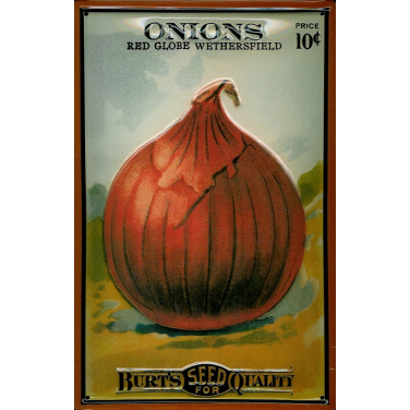 Burt's Onions  -(20 x 30cm)